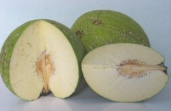 uncookedbreadfruit_small